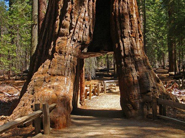 Camping Sequoias geant de californie